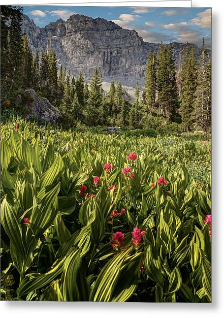 Boulders And Wildflowers In Albion Basin Greeting Card by Utah Images