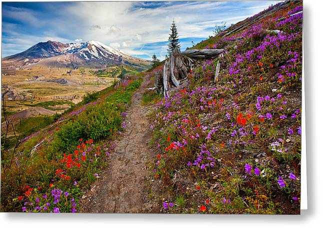 Boundary Trail Greeting Card by Darren  White