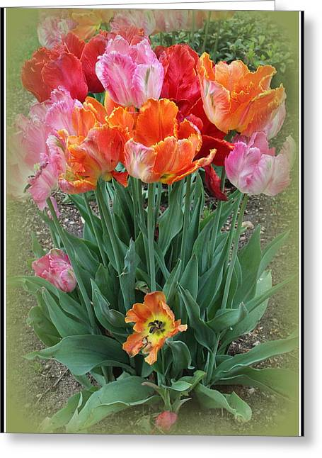 Bouquet Of Colorful Tulips Greeting Card