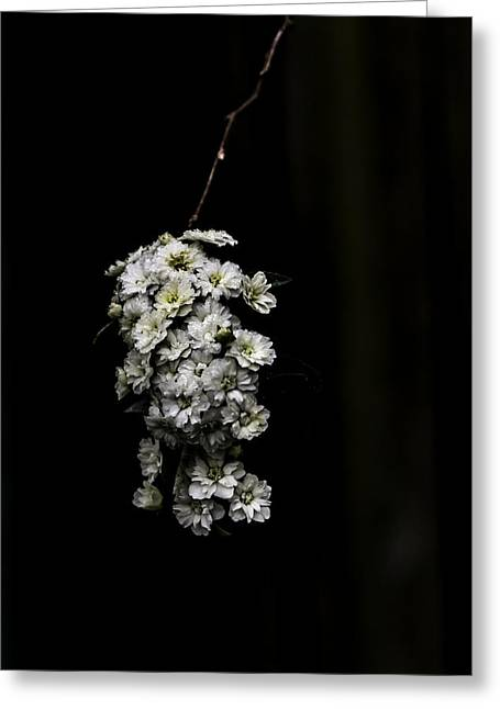 Bouquet Of White Greeting Card