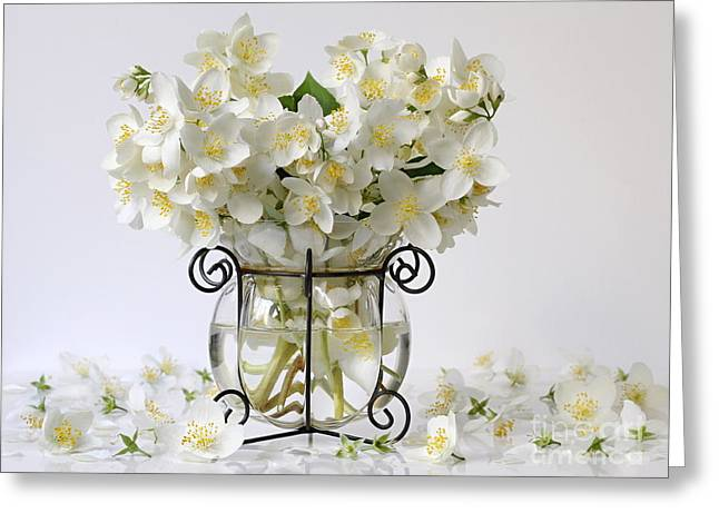 Bouquet Of White Jasmine Flowers In A Vase. Romantic Floral Still Life With Philadelphus Flowers. Greeting Card