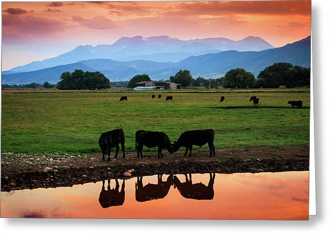 Bovine Sunset Greeting Card by Johnny Adolphson