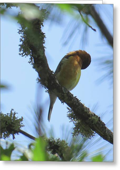Bird Of Pray - Images From The Garden Greeting Card