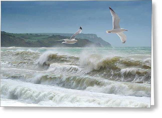 Bowleaze Cove Greeting Card