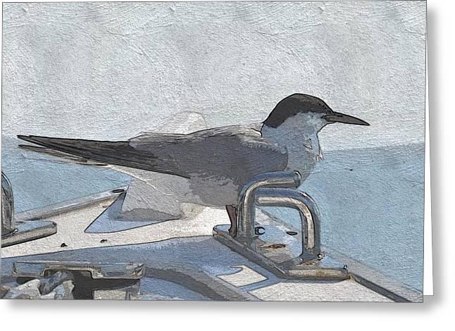 Bowrider Common Tern 2 Greeting Card