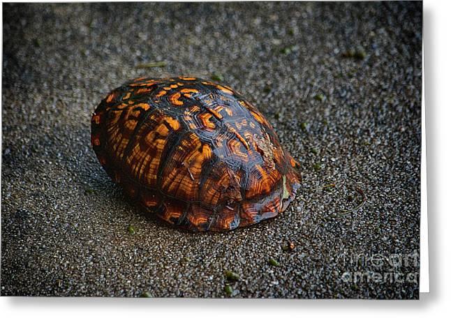 Box Turtle Journey  Greeting Card by JW Hanley