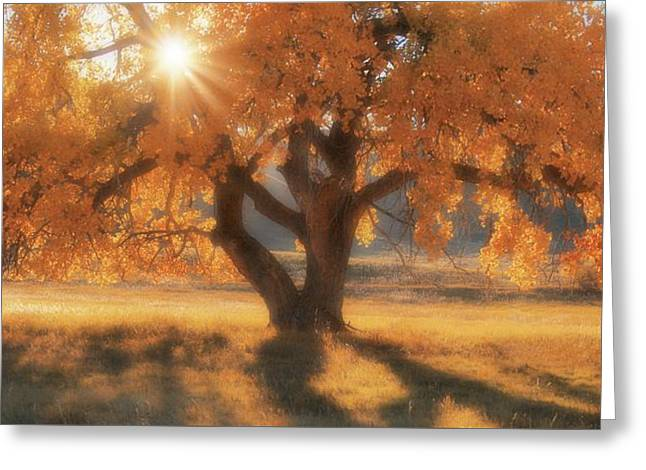 Boxelder's Autumn Tree Greeting Card