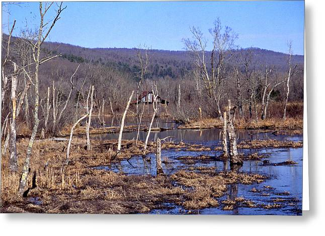 Boxely Swamp2 Greeting Card by Curtis J Neeley Jr