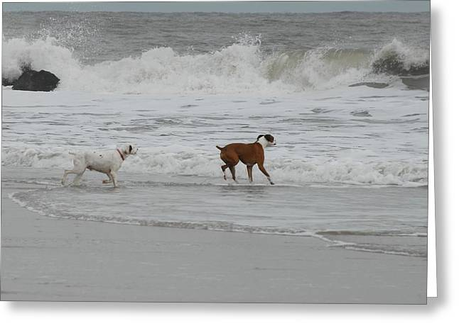 Boxer And Pointer Greeting Card by Joyce StJames