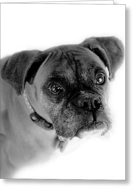 Boxer Dog Greeting Card by Marilyn Hunt