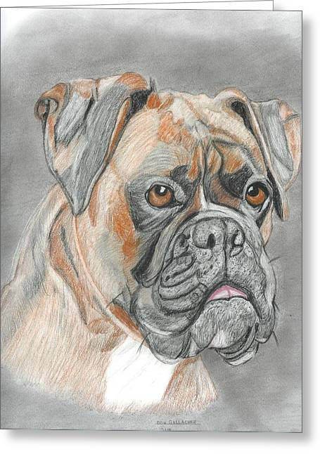 Boxer Greeting Card by Don  Gallacher