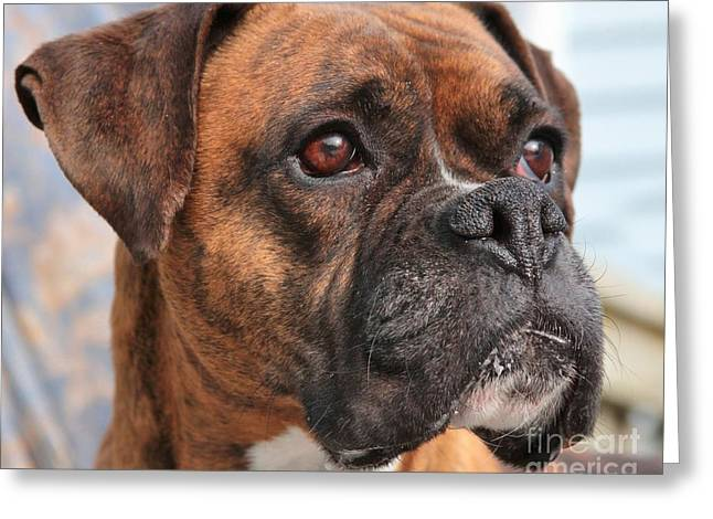 Boxer Portrait Greeting Card