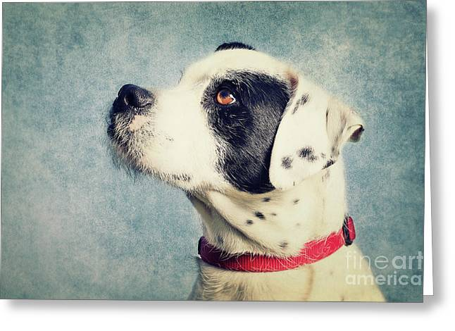 Boxer-schnautzer-mix Greeting Card by Angela Doelling AD DESIGN Photo and PhotoArt