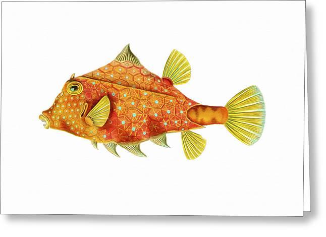 Boxfish Greeting Card by David Wagner