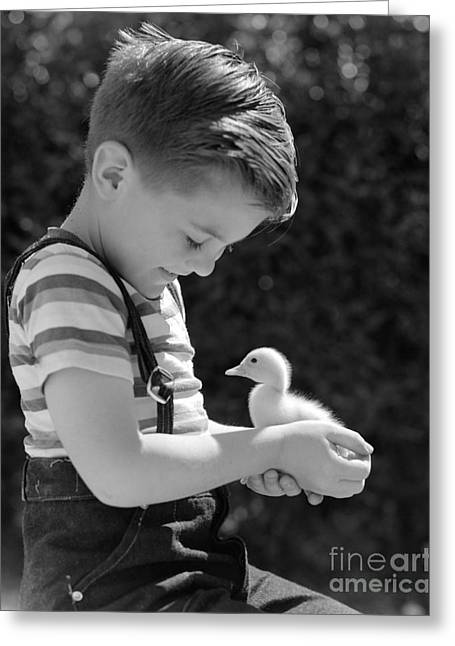 Boy With Duckling, C.1950s Greeting Card by Pound/ClassicStock