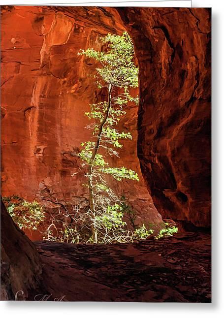 Boynton Canyon 07-034 Greeting Card