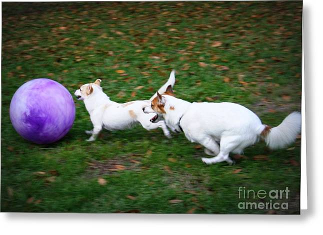 Dog Playing Ball Greeting Cards - Boys will be Boys Greeting Card by Mandy Shupp