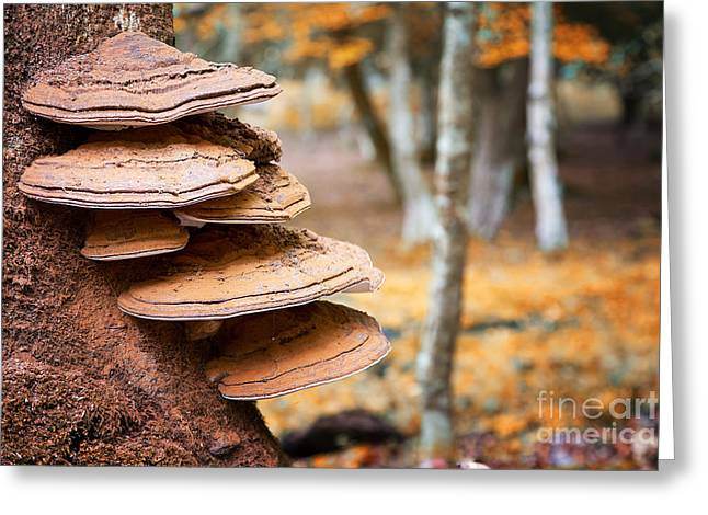 Bracket Fungus On Beech Tree Greeting Card by Jane Rix