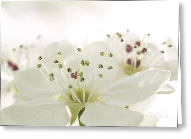 Bradford Pear Flower Greeting Card by Iris Richardson