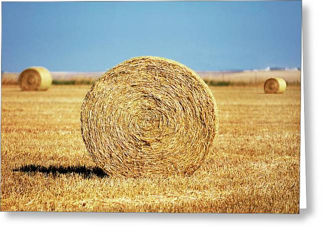 Brady Bales Greeting Card by Todd Klassy