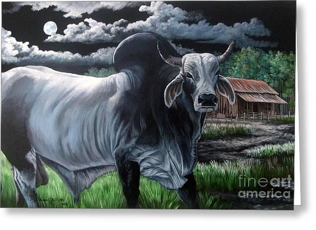 Brahma Bull- Okeechobee Moonlight Greeting Card