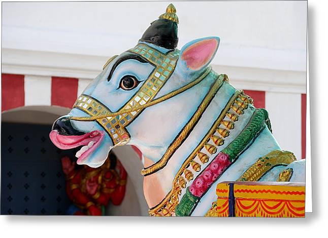 Sacred Cow - Kapaleeshwarar Temple, Mylapore Greeting Card by Richard Reeve