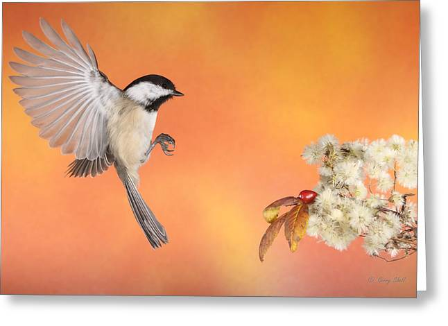Greeting Card featuring the photograph Braking For The Rose Hip by Gerry Sibell