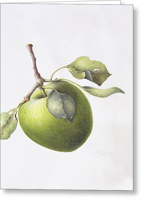 Bramley Apple Greeting Card by Margaret Ann Eden