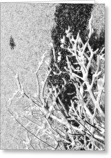 Branch In Lake Ice With Snow Black And White  Greeting Card by Randy Steele
