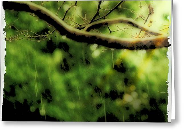 Branch In The Rain Greeting Card by Ken Gimmi