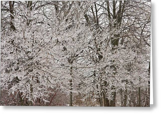 Branches In Ice  Greeting Card by Hany J