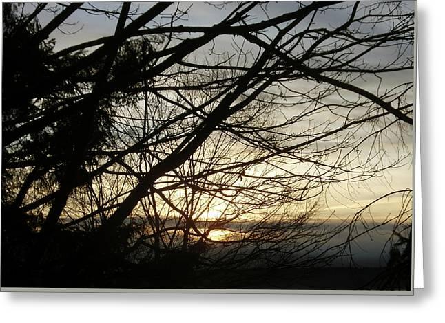 Branches At Sunset Greeting Card by Jaeda DeWalt