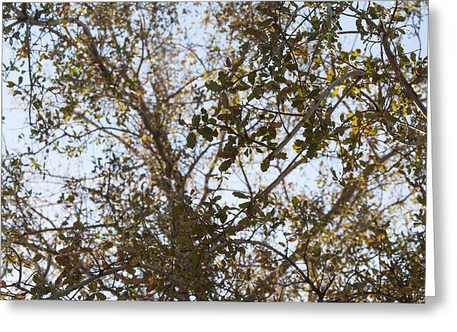 Greeting Card Featuring The Photograph Branches By Kimberly Valentine