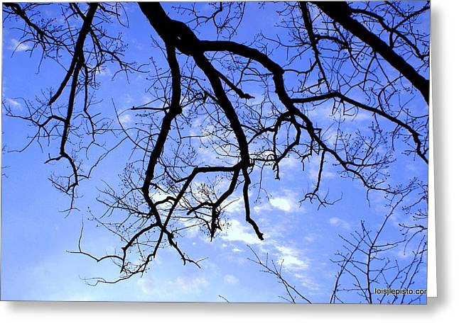 Branches Greeting Card by Lois Lepisto