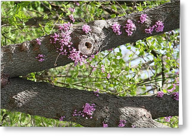 Branches Of Color Greeting Card by Eric Irion