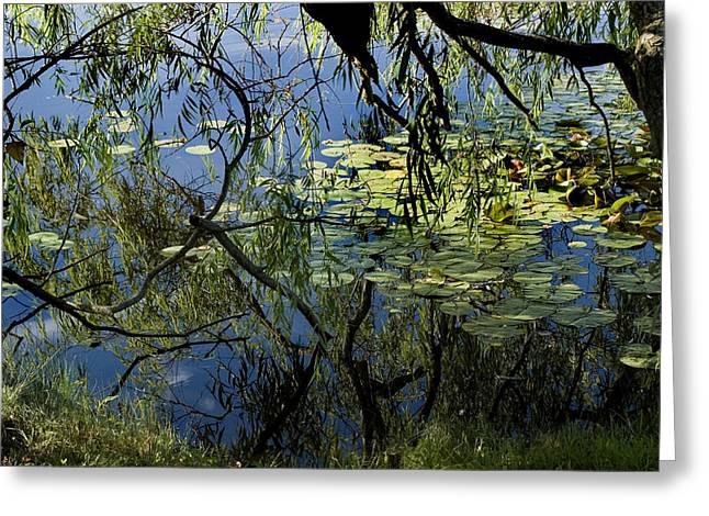Branches Of Trees Reflected In A Lily Greeting Card by Todd Gipstein