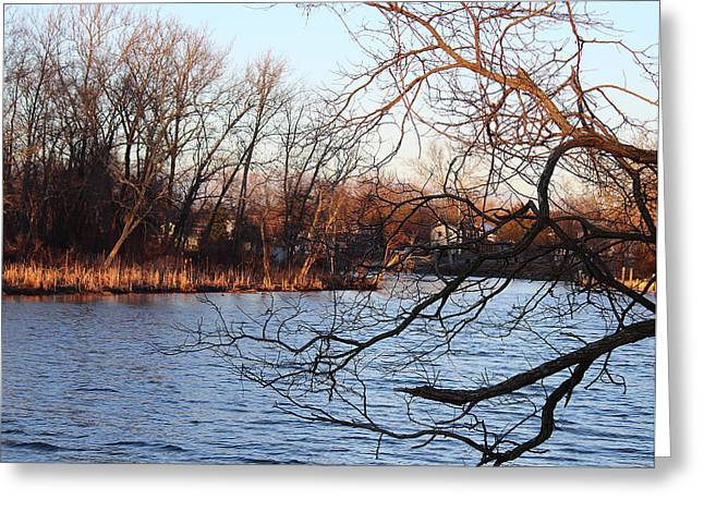 Branches Over Water Greeting Card