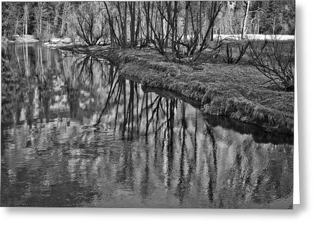 Branches Reflected In Yosemite Greeting Card