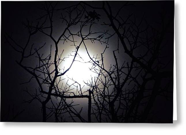 Branches To The Moon Greeting Card