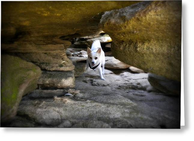 Cavern Greeting Cards - Brave Boy Greeting Card by Mandy Shupp