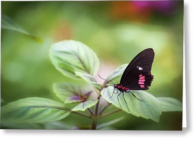 Greeting Card featuring the photograph Brave Butterfly  by Cindy Lark Hartman