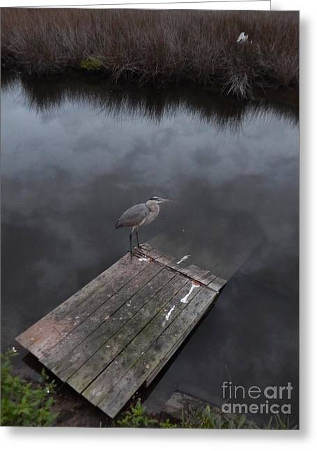 Brave Heron Greeting Card