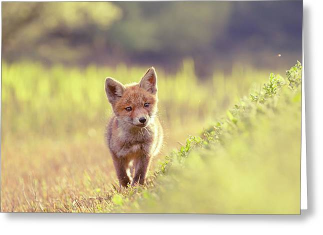 Brave New Kit - Baby Fox Exploring The World Greeting Card