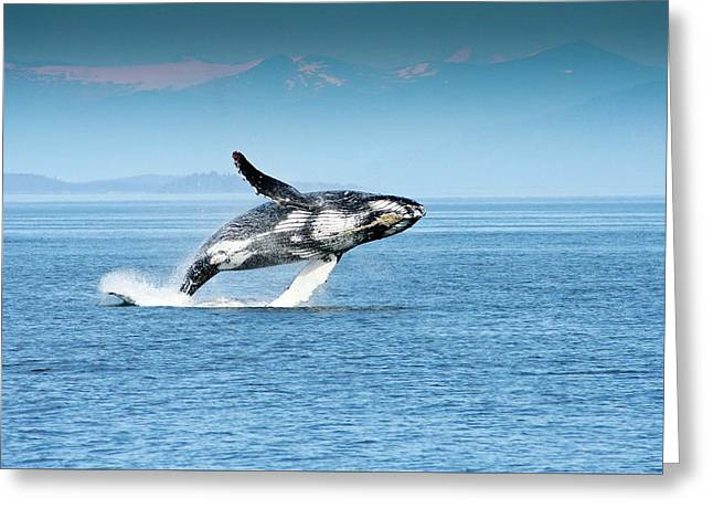 Breaching Humpback Whales Happy-4 Greeting Card