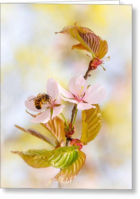 Greeting Card featuring the photograph Breakfast At Sakura by Alexander Senin