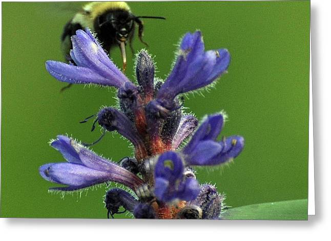 Greeting Card featuring the photograph Bumble Bee Breakfast by Glenn Gordon