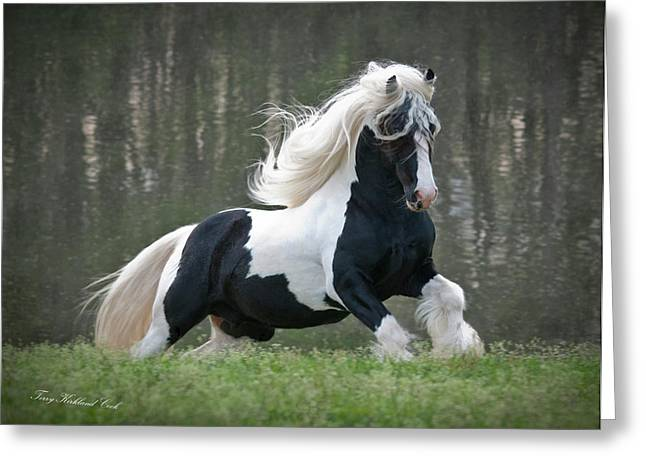 Gypsy Vanner Horse Greeting Cards - Breathtaking Stallion Greeting Card by Terry Kirkland Cook