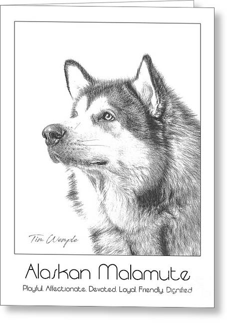 Breed Poster Alaskan Malamute Greeting Card by Tim Wemple