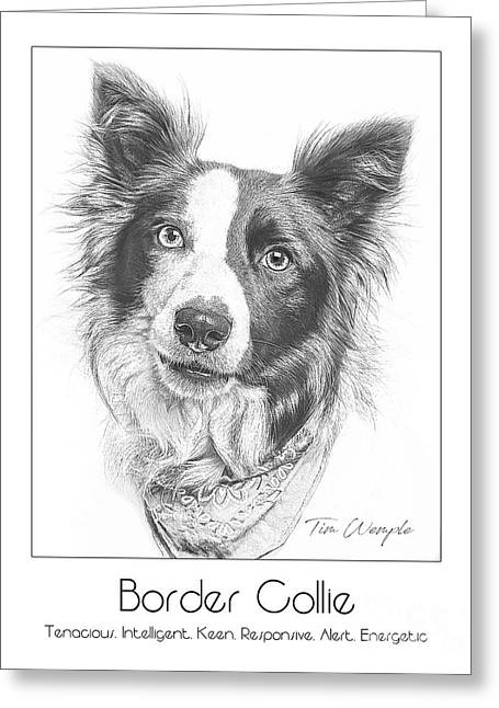 Breed Poster Border Collie Greeting Card by Tim Wemple