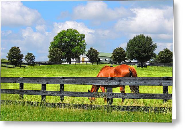 Breeding Beauties Greeting Card